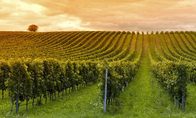 Monterey Wine Country