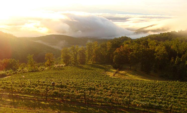 Monticello Wine Trail