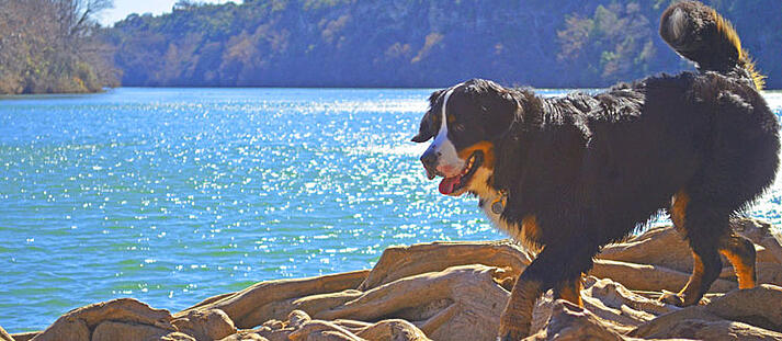10 Most Dog-Friendly Vacation Spots in the U.S.