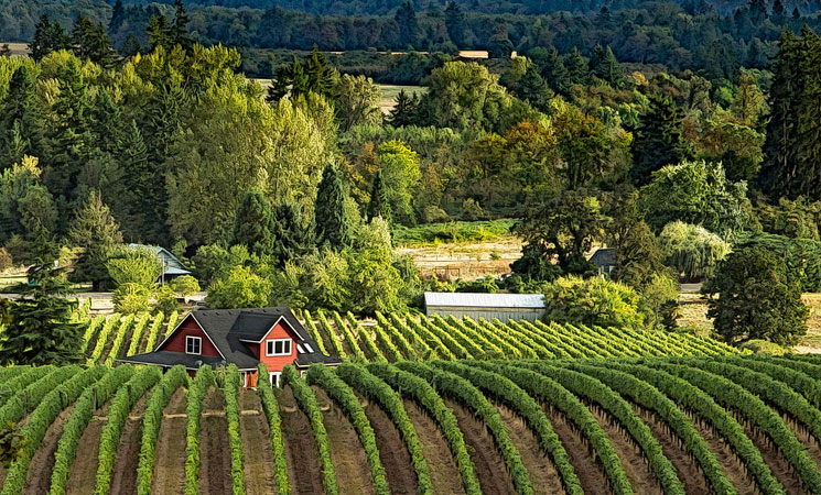 The Best Wine Regions to Visit this Autumn