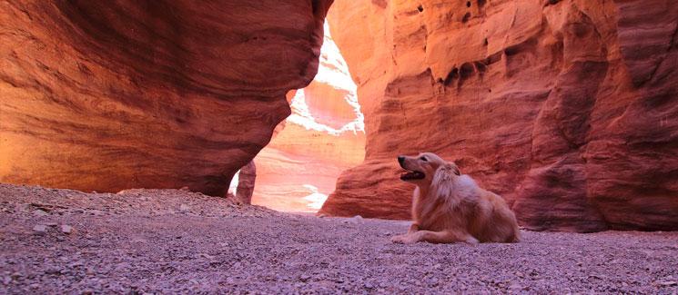 Grand-Canyon-Dog-Friendly
